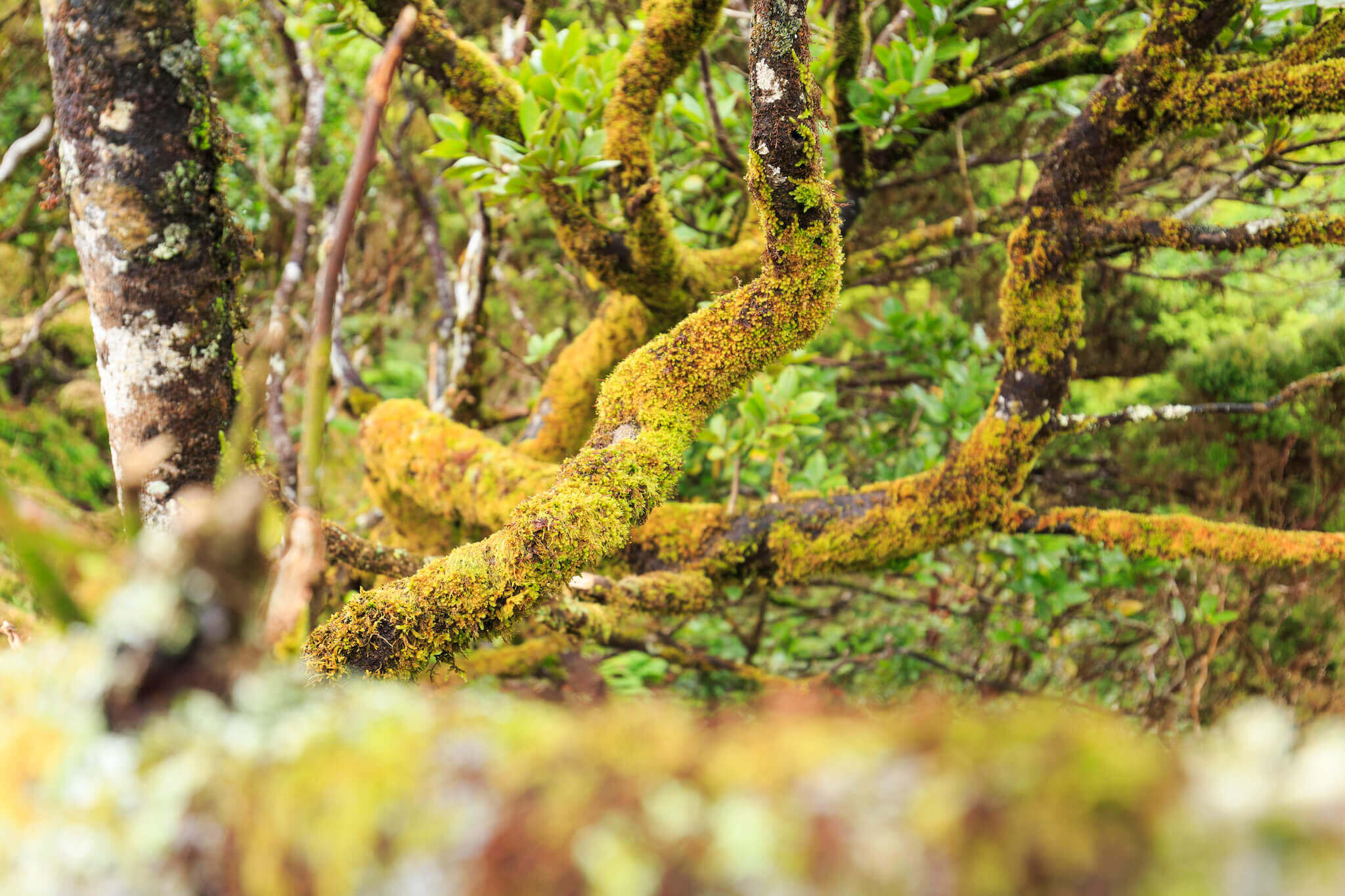 o-manto-verde-da-ilha-img2