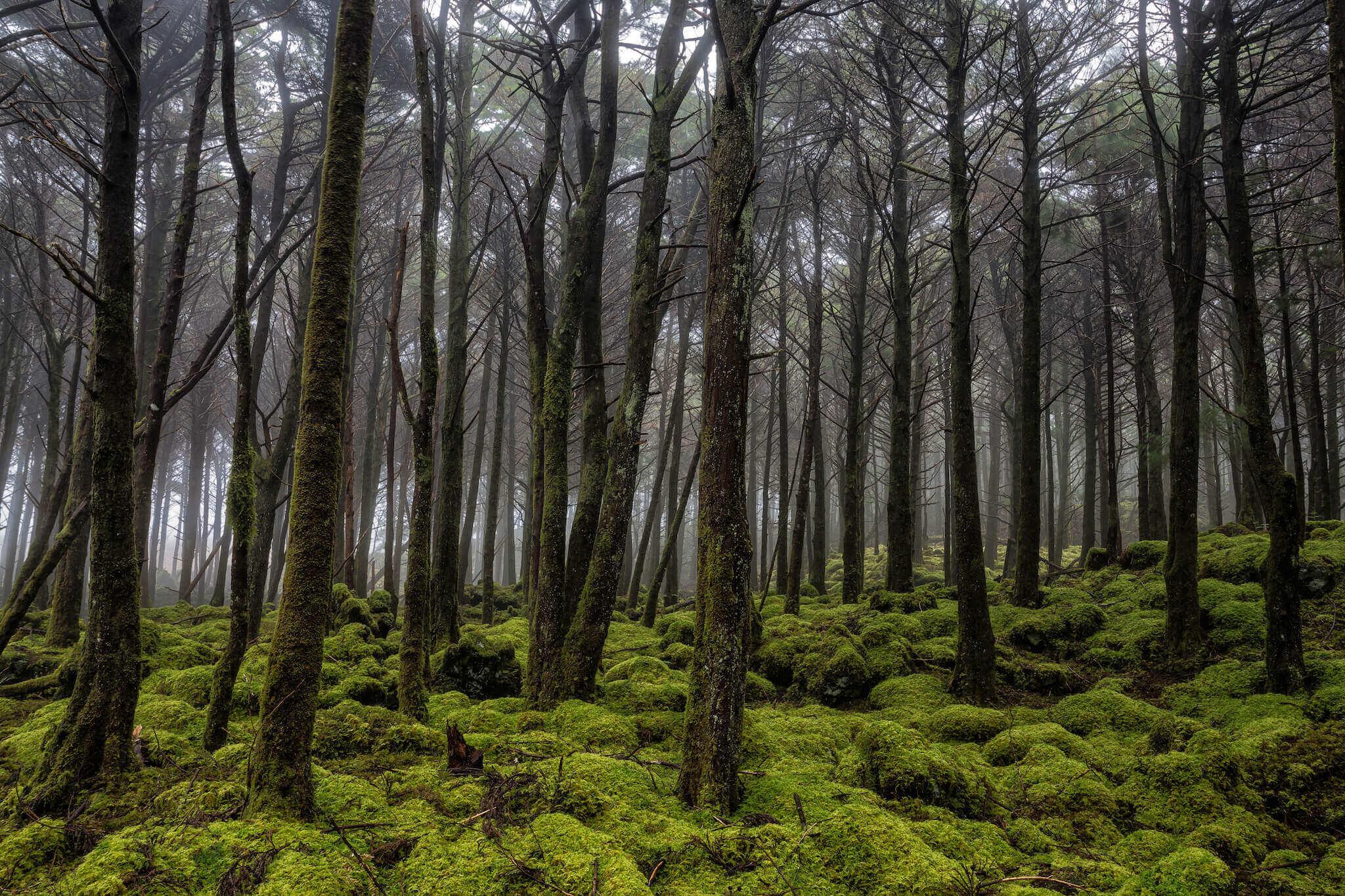 o-manto-verde-da-ilha-img7