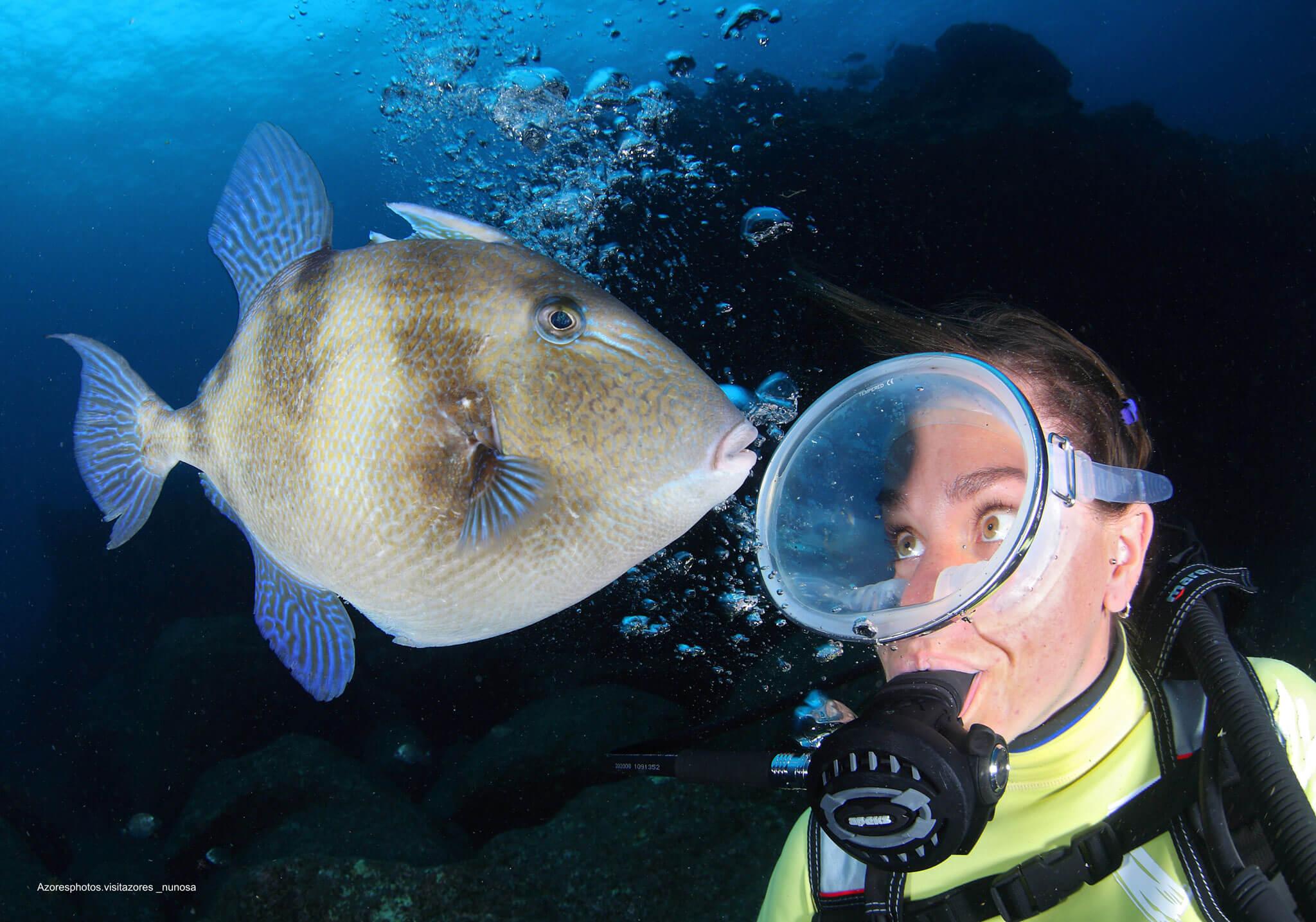 experiencias-mar-mergulho-peixe-explore-terceira