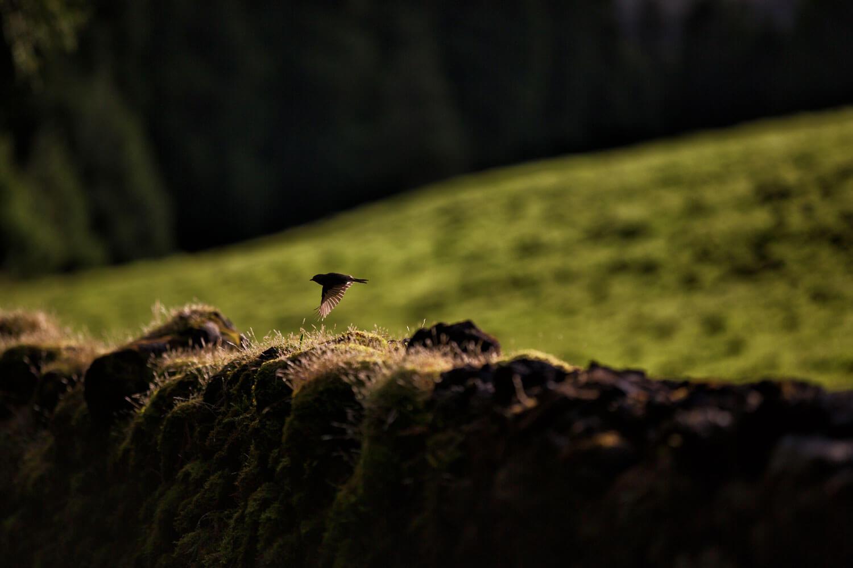 experiencias-terra-aves-exploreterceira-com