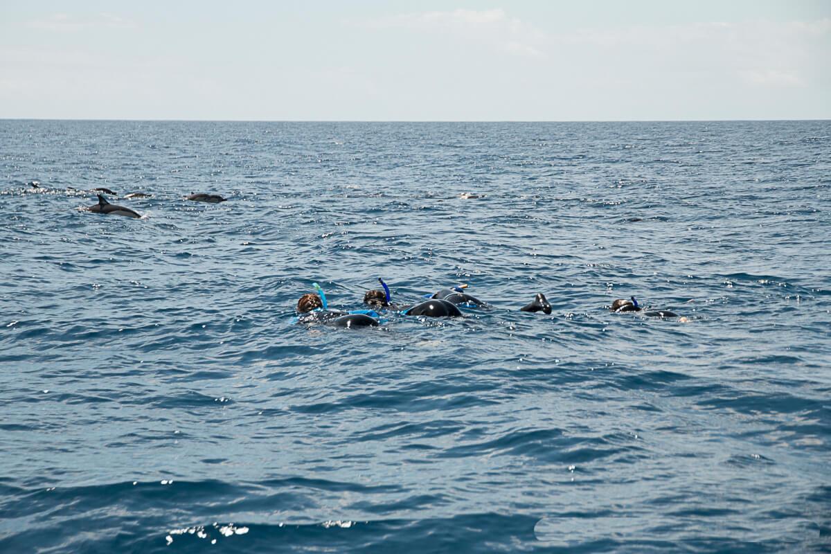 nadar-com-golfinhos-4
